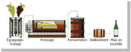 La fabrication du vin