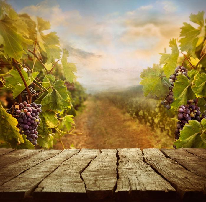 Métiers du vin : quelles formations suivre pour y parvenir ?